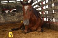 Esta persona fue capturada y deberá responder por el delito de maltrato animal.