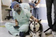 Intervención asistida con animales.