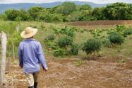 Proceso de restitución de tierras llegará por primera vez a Santa Rosa de Osos, Antioquia
