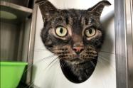 Gato abandonado por 52 días