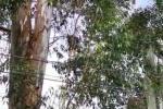 Mujer de 50 años murió electrocutada por un cable de luz en La Estrella, Antioquia