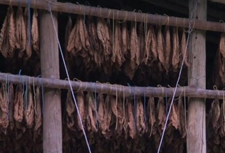 Tabacaleros en Santander