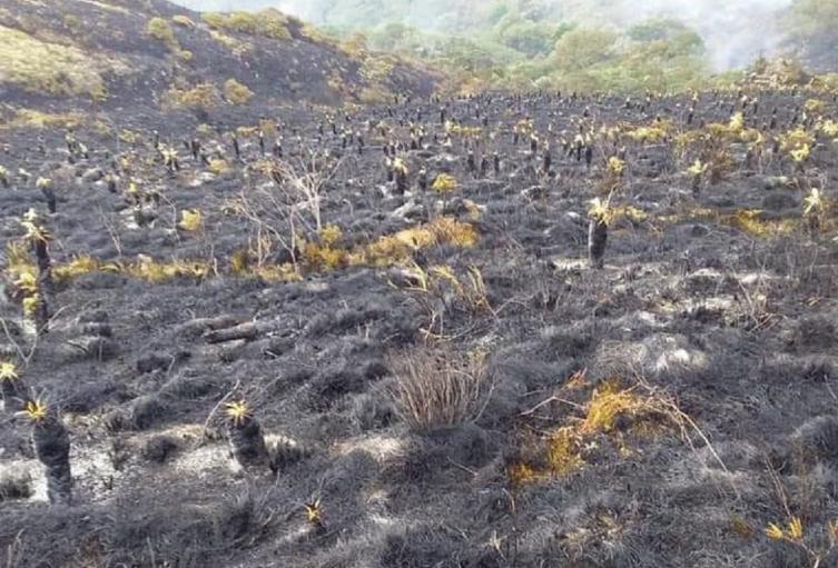 Inicialmente se habla de un promedio de 800 hectáreas de terreno destruidas.