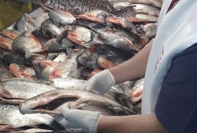 Reportan incremento en el precio del pescado en Santander