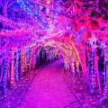 Alumbrado navideño Parque el Gllineral