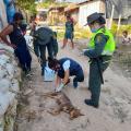 Las autoridades investigan la agresión animal.