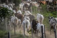 Hay una política de exportación que afecta a los ganaderos en Santander.