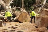 Tala de árboles en zona del Catatumbo