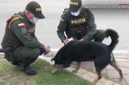 Policía en Norte de Santander