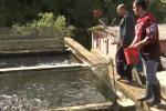 piscicultores en Santander