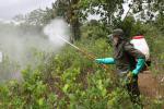 En el Magdalena Medio se han erradicado 3.392 hectáreas de cultivos ilícitos