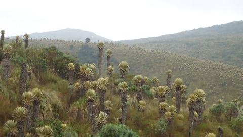 Aprobado plan de manejo ambiental del páramo Anaime Chilí Barragán - Alerta Tolima