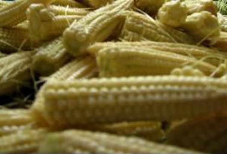 Fenalce denuncia fraudes en importaciones de maíz