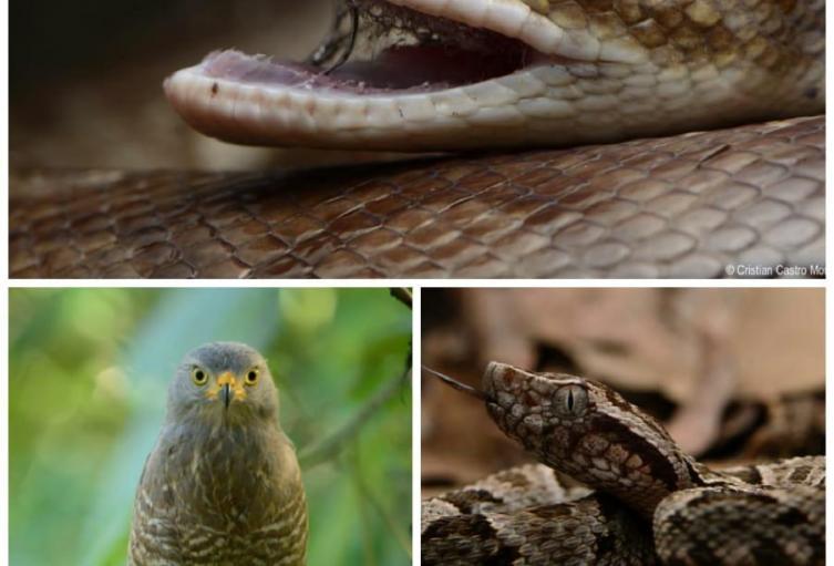 11 animales silvestres fueron liberados por Cortolima