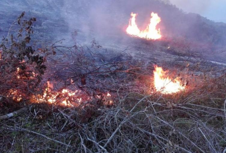 Incendio Forestal en Ibagué