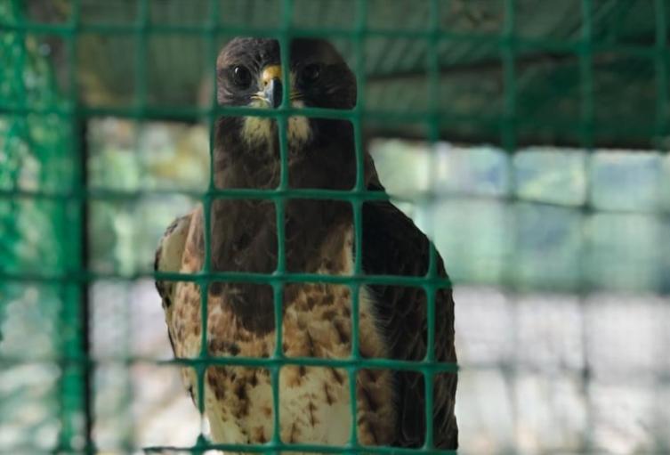 Las aves en esta época del año visita el Cañón del Combeima, Mariquita y el municipio de Lérida