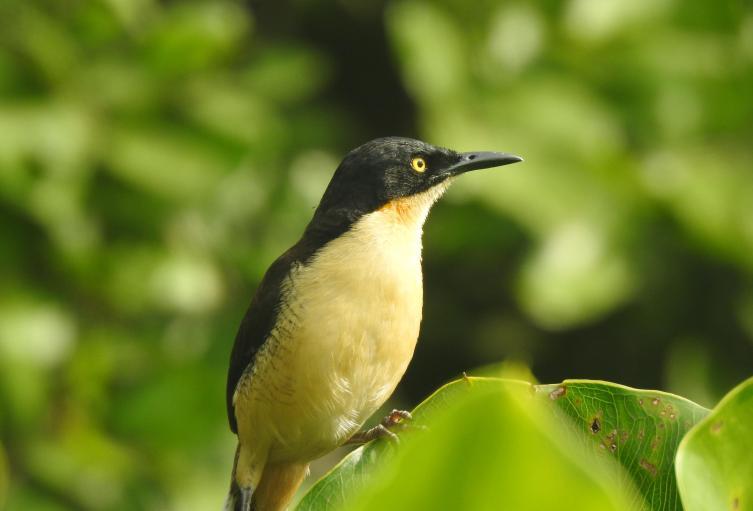 Turismo de Naturaleza en la Amazonia.