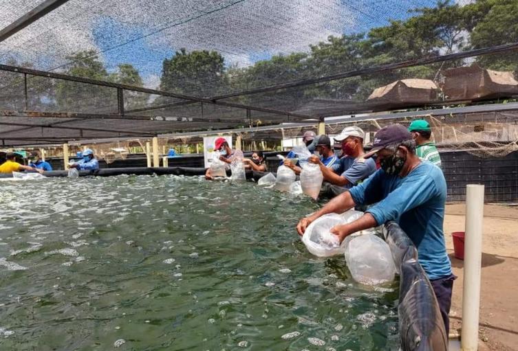 ADR- Productores en el Tolima