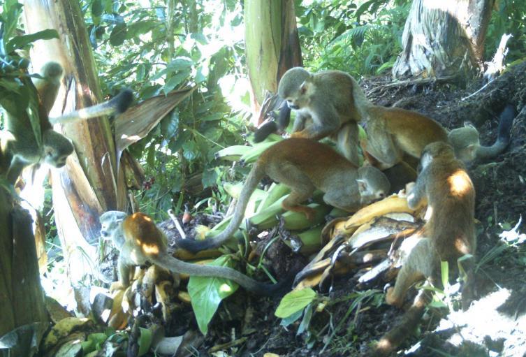 Registran fauna silvestre en la Serranía de Peñas Blancas en el Huila.