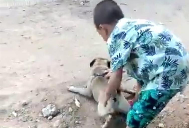 Se debe abrir un proceso legal de restablecimiento de menores, acción judicial administrativa, así como uno penal por maltrato animal