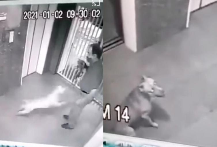 [Video] Pitbull atacó brutalmente a un perro y a su dueño