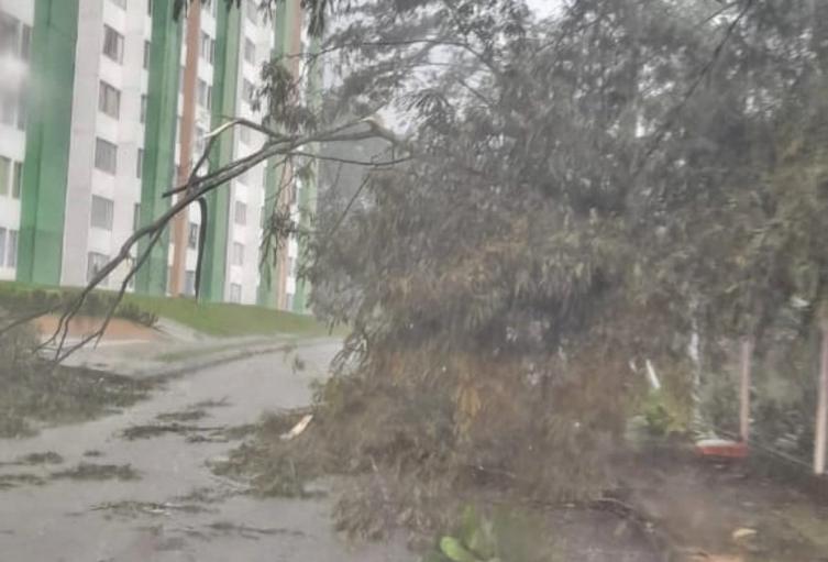 Árbol caído por lluvias en Ibagué