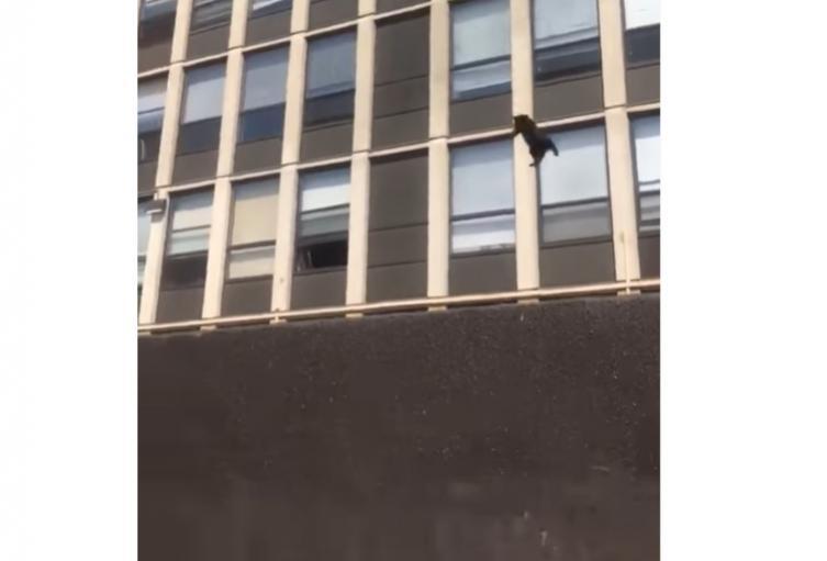 Gato saltó de quinto piso en llamas