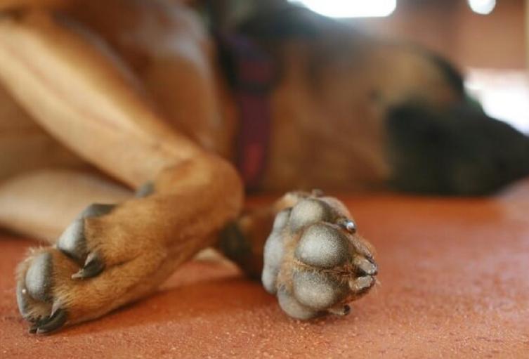 Perro asesinado Huila