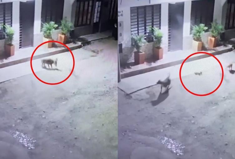 Perro ha matado a sus dos gatos
