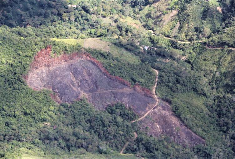 131deforestacionTolima.jpeg