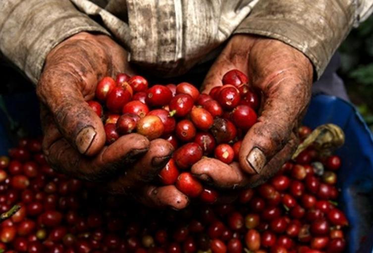 Cafeteros-del-Tolima-se-movilizarán-para-exigir-soluciones-a-crisis-económica.jpg