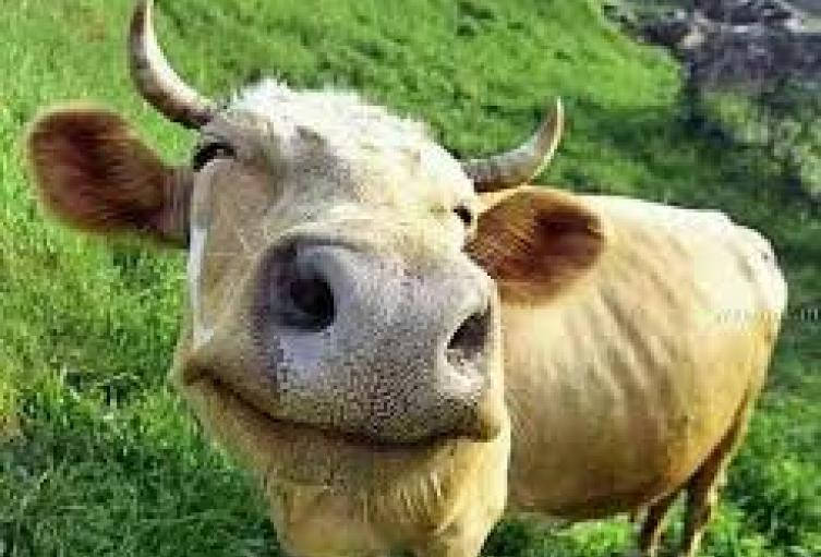 Colombia-ya-tiene-consejo-nacional-y-comité-técnico-de-bienestar-animal..jpg