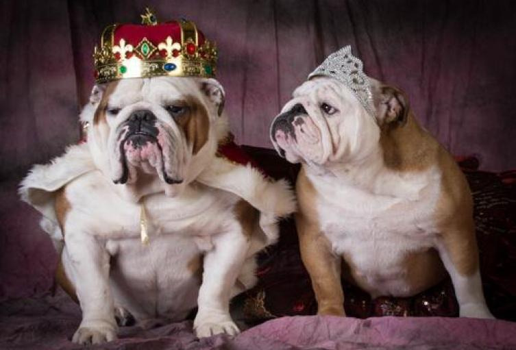 El-56-de-las-personas-prefiere-comprar-perros-de-raza-porque-les-da-estatus..jpg