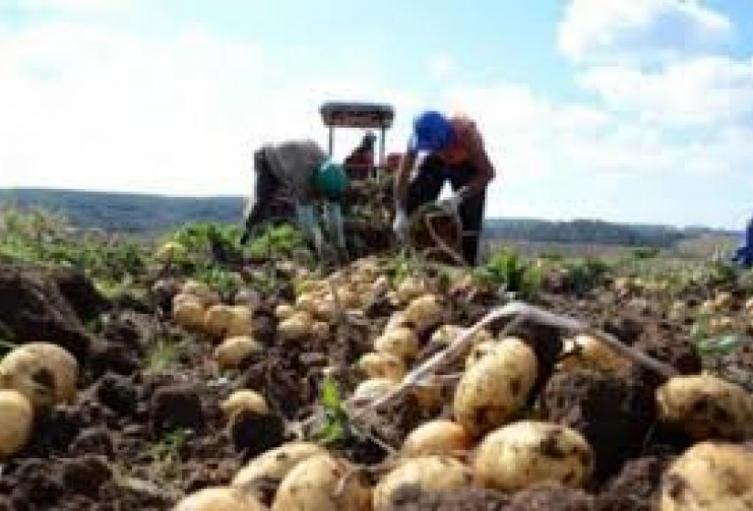 Formalizar-tierras-y-ampliar-cultivos-estrategia-del-gobierno-contra-el-hambre.jpg