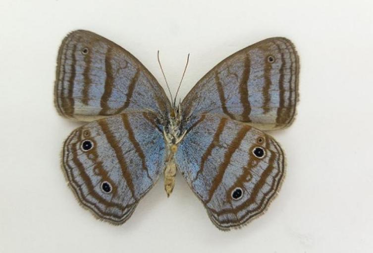 Hallan-36-posibles-nuevas-especies-colombianas.jpg