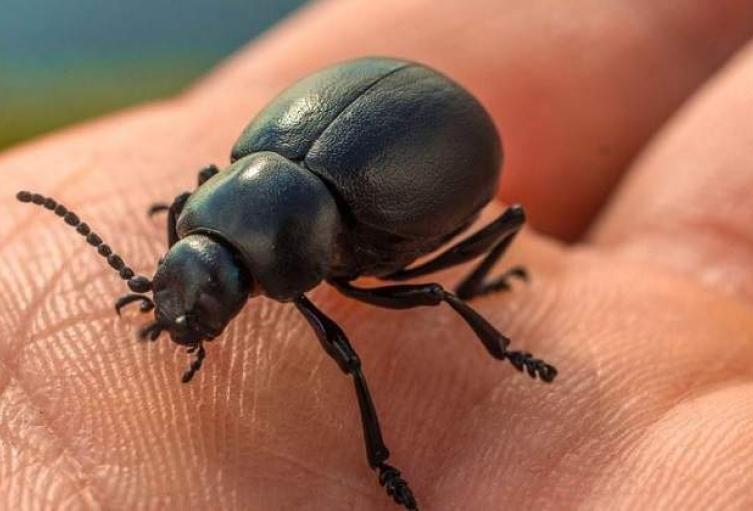 Insecto-en-una-mano.jpg