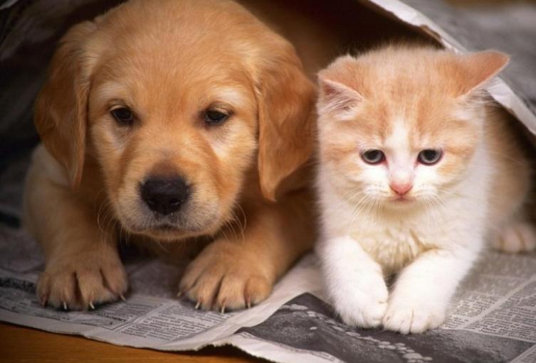 Ley-mano-amiga-una-iniciativa-para-auxiliar-a-los-perros-ambulantes.jpg
