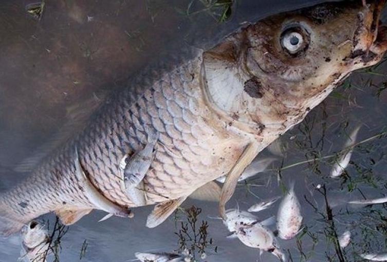 Los-peces-colombianos-se-están-intoxicando-a-causa-del-Glifosato.jpg