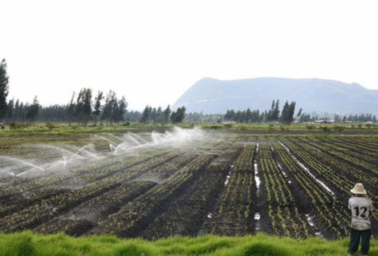 Riego-a-cultivos-2.jpg