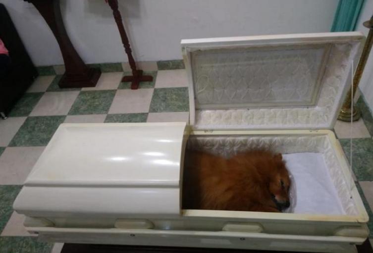 Velada-en-un-ataúd-y-con-un-funeral-familia-despidió-a-su-mascota.jpg
