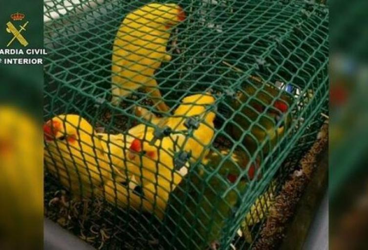 aves_0.jpg