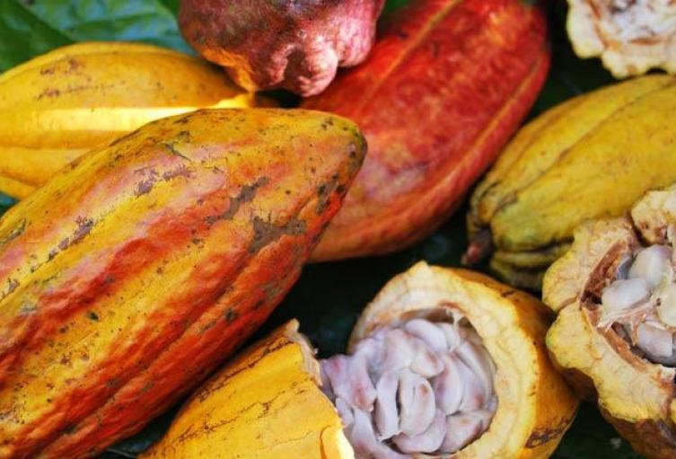 cacao-natural.jpg