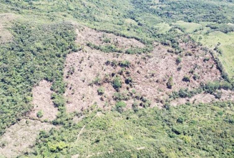 deforestacióntolima.jpeg