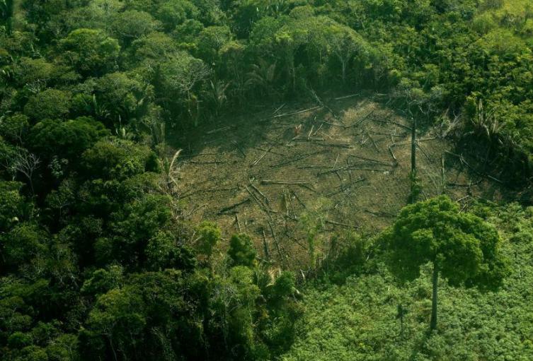 deforestacion_en_la_amazonia_7_0.jpg