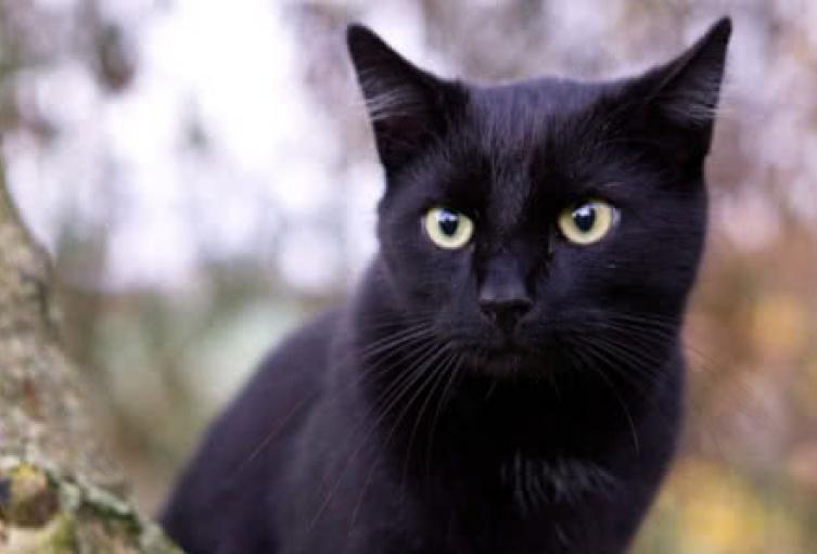 gato-desaparecido990.jpg