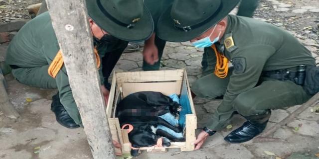 Rescataron a 'Negrita' una perrita lesionada en Ambalema