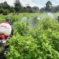 Erradicación de cultivos ilegales en Colombia