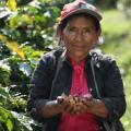 No inclusión del Tolima en licitación que adelanta la Agencia de Desarrollo Rural, para la aplicación del proyecto de Extensión Agropecuaria