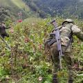 Erradicaron cultivos de amapola en Anzoátegui