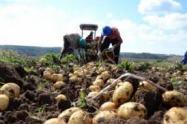 Capturan a dos campesinos por sembrar papa en zona de páramo